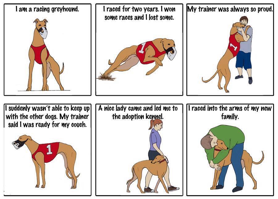 Adopt A Retired Greyhound Racing Dog